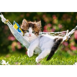Kočka v síti